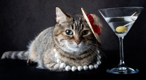 Почему коты любят оливки читайте статью