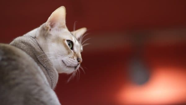 Популярные имена для кошек на букву А