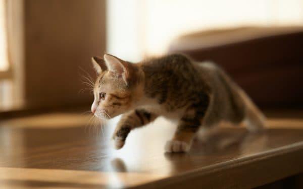 Самые красивые клички для кота