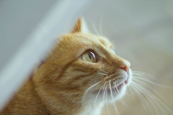 Стоматит у кошек читайте статью