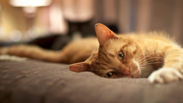 Строение позвоночника кошки