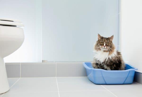 Запор у кошки читайте статью