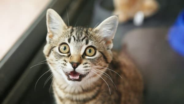 Запор у кошки. Причины, симптомы, эффективные методы лечения